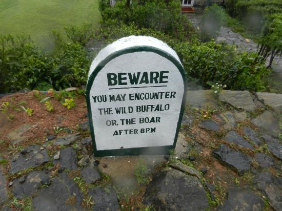 Heritance Tea Factory: Be aware of the wildlife!