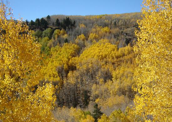 Antonito, CO: Fall colors from the train