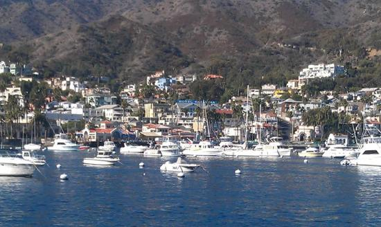 The Avalon Hotel on Catalina Island: There it is! Avalon is the 3 story to the left of the blue Catalina Hotel sign-