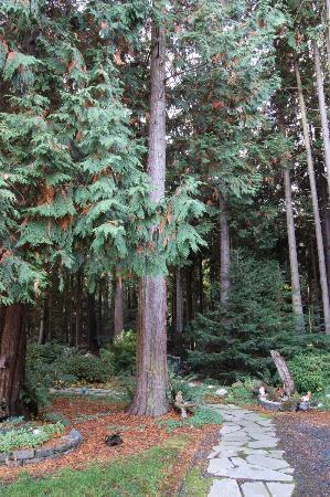 Sea Cliff Gardens Bed & Breakfast: and in the front yard is a forest!