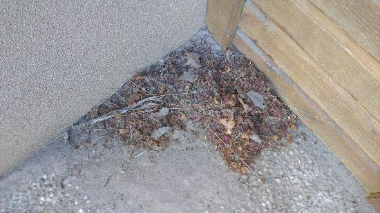 Mercure Oakridge Resort Lake Wanaka: What I swept into the corner from the entrance/carport and it remained there our stay