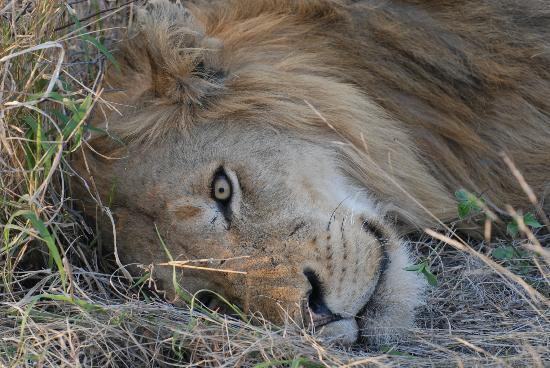 Naledi Bushcamp and Enkoveni Camp: on one of our game drives