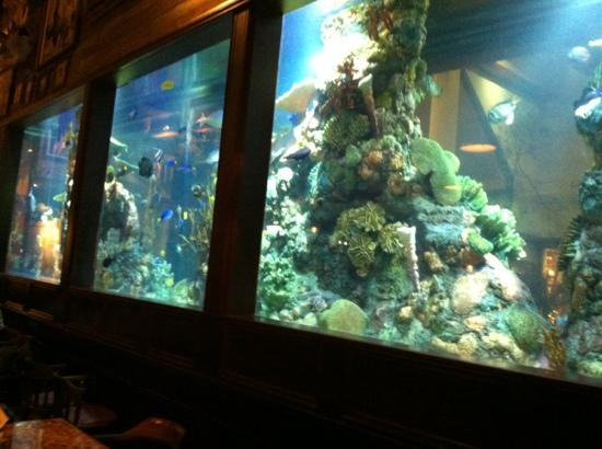 Beautiful Fish Tank Picture Of Islamorada Fish Company