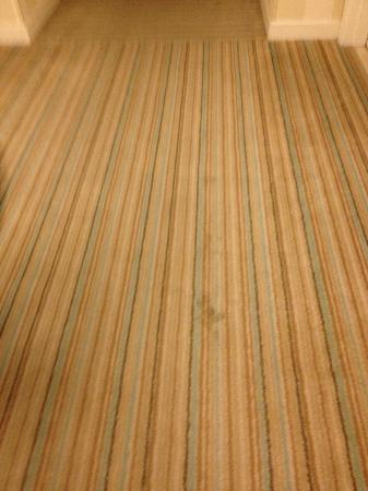 Hilton Fort Lauderdale Marina: Stained and soiled carpet in the hallway