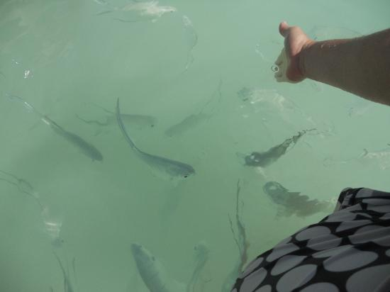 The Royal Suites Yucatan by Palladium: take bread out into the ocean -- tons of fish will come up to you and eat it. It is AMAZING to s