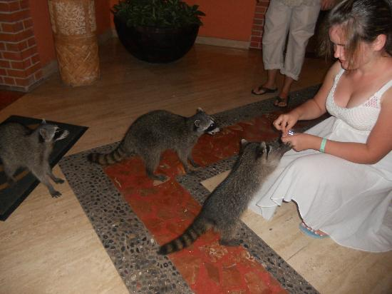 The Royal Suites Yucatan by Palladium: These guys come out at night--Very friendly