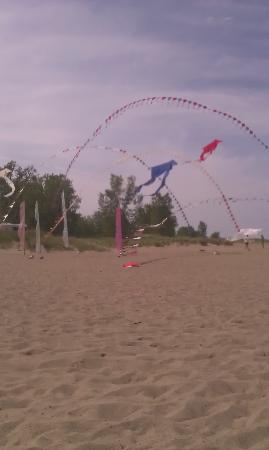 Sheraton Erie Bayfront Hotel: kite flying on nearby Preque Isle park
