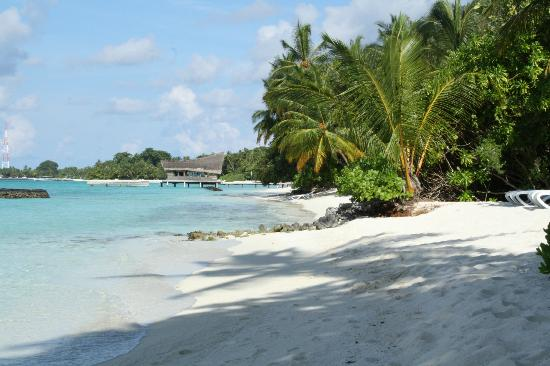 Kuramathi Island Resort: Beah near Palm restaurant