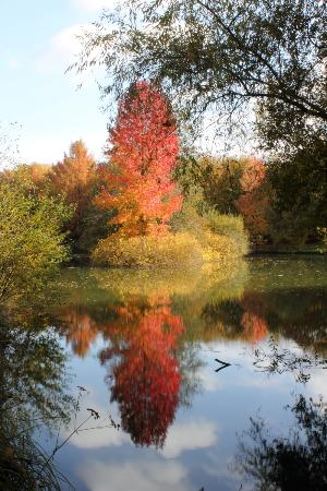 Le Jardin Sarlat: Autumn in Sarlat