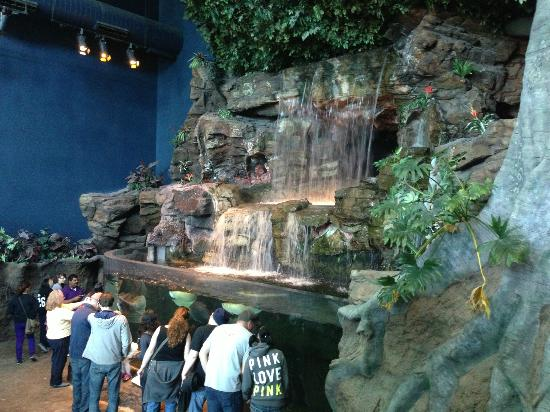 Waterfall Picture Of Ripley 39 S Aquarium Of The Smokies