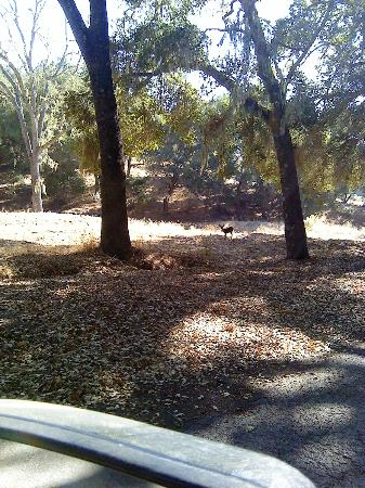 Dunning Ranch Guest Suites: Many deer visit the grounds