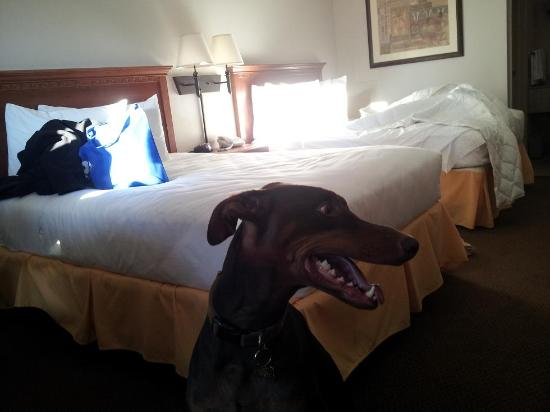 Atlantis Inn: Honda the Doberman