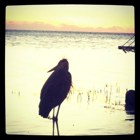 Little Palm Island Resort & Spa: Bird at the beach at sunset