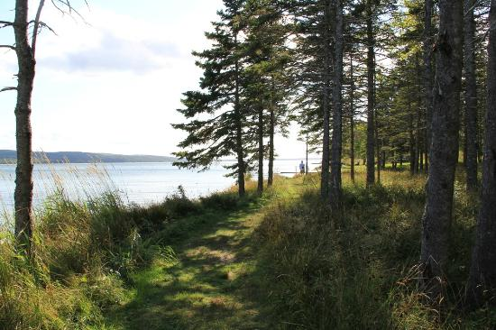 Silver Dart Lodge: Walking trail across road to lake