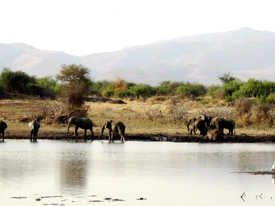 Manyara Ranch Conservancy: view from the hut at the watering hole
