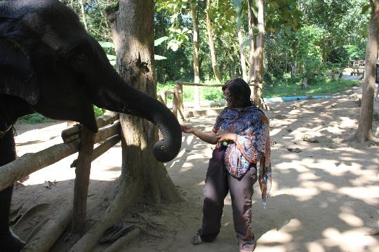 Lao Spirit Resort: You can feed the elephants at the falls