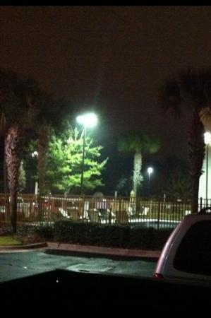 Red Roof Inn Gainesville: palm trees by the pool