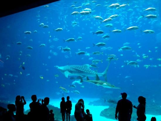 Large Viewing Room of the Whale Shark Tank - Picture of ...