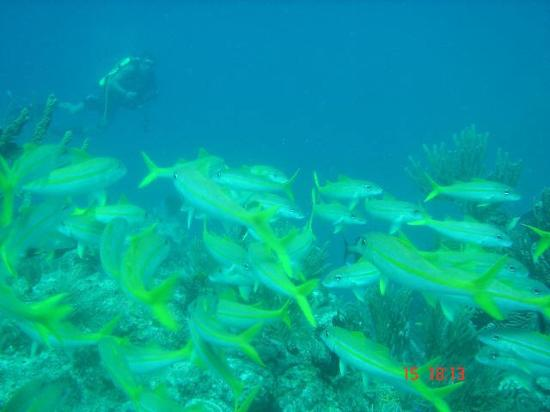 Shannas Cove Resort: Diver Fish