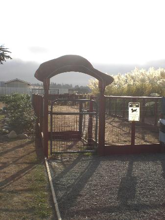 Surf Motel and Gardens: great enclosed exercise & potty area for dogs