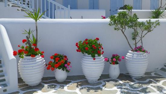 Petinos Beach Hotel: Pretty pots outside reception
