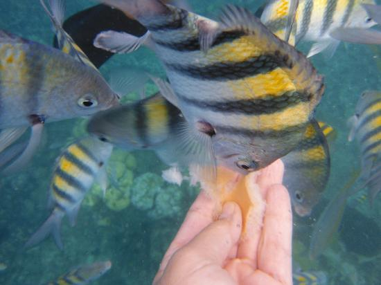 The Tropical at Lifestyle Holidays Vacation Resort: Hungry Fishes
