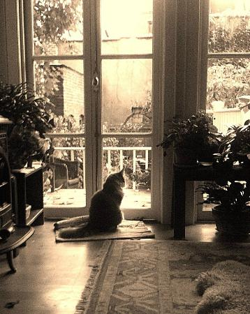 Rooms to Let: Marg's cat looking out to the back patio area which is lovely and private