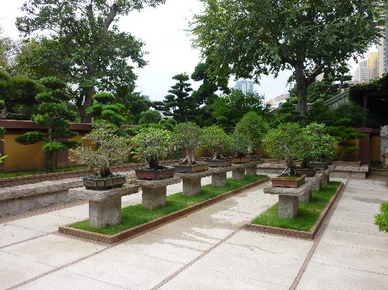 Foto de jard n nah lian hong kong bonsai tripadvisor for Bonsai de jardin