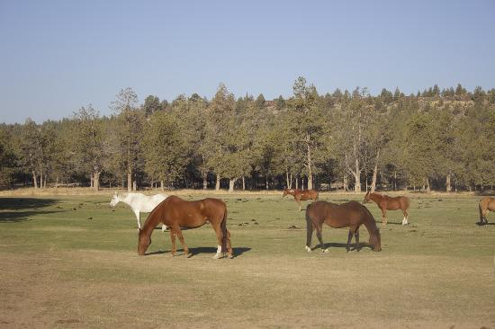Long Hollow Guest Ranch: Horses ready to ride