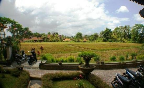 Kunang-Kunang Guesthouse: Your view from Room 10