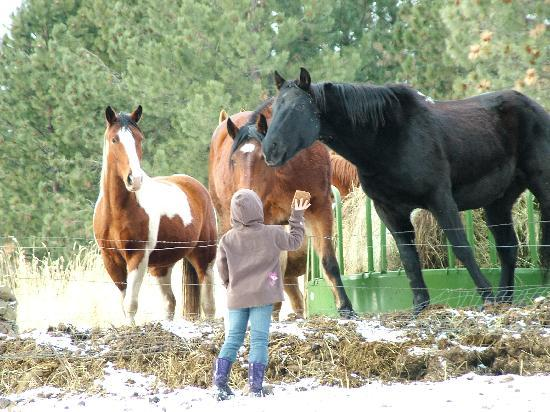 Grangeville, ID: Playing with some of the horses
