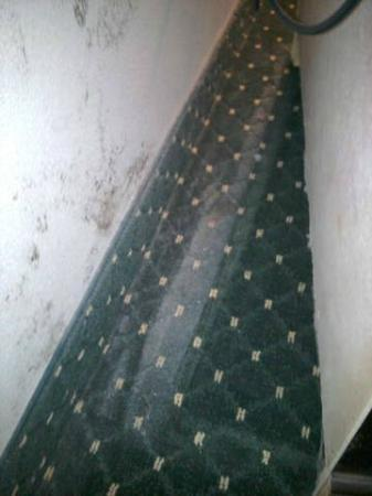 Holiday Inn La Crosse: this is one of four areas we saw, along with bodily fluids, enjoy being exposed to black mold