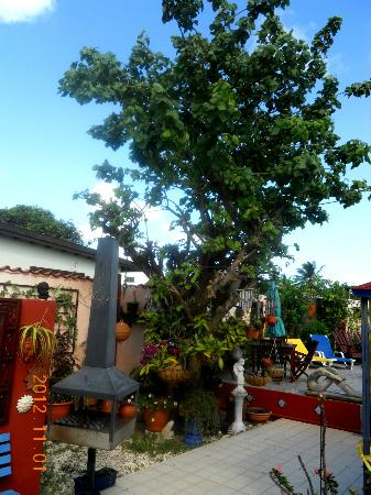 Littledavid Guesthouse: The only shade tree in the pool area
