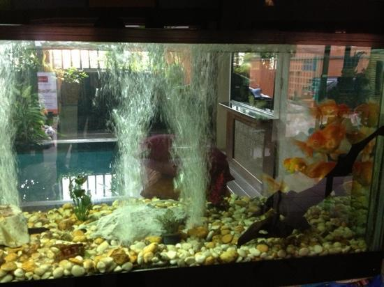  : Fish tank in lobby