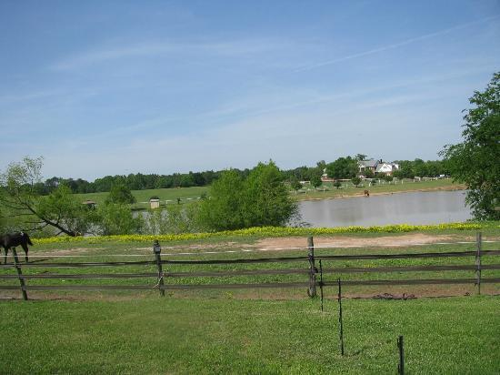 Southern Cross Ranch: One view of the propery
