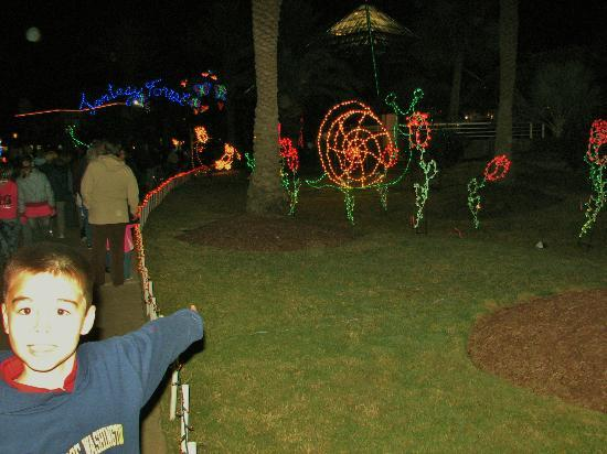 Festival Of Lights Moving Turtle Picture Of Moody Gardens Galveston Island Tripadvisor