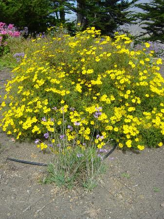 Ragged Point Inn and Resort: Amazing Plants in bloom in Mid-October