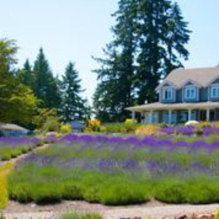 Cobble Hill, Canada: B&B above lavender garden