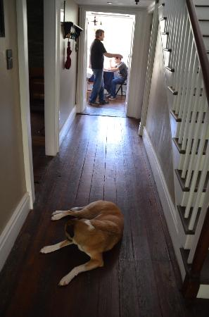 Stonehouse Bed and Breakfast: Cane keeps an eye on things as breakfast is served.