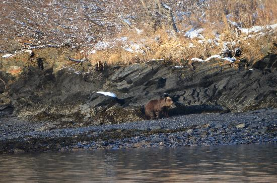 Kodiak National Wildlife Refuge, AK: Pretty little brown bear