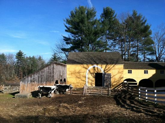 Old Sturbridge Village: Beautiful barns and animals