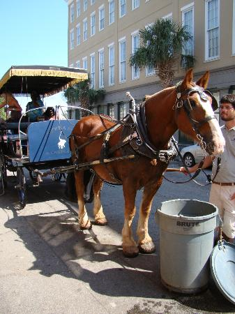 Carolina Polo And Carriage Tour