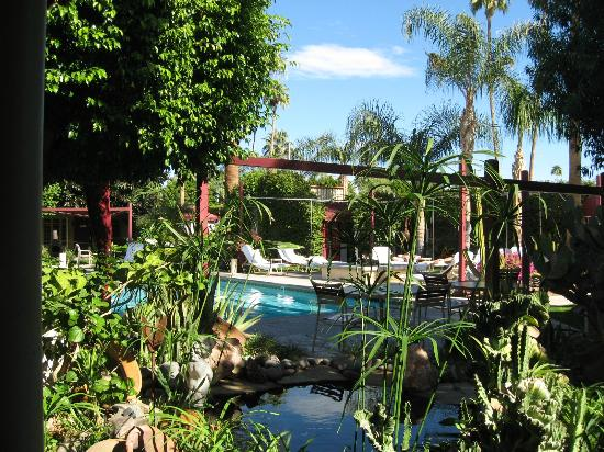 Desert Paradise Gay Men's Resort: Pool / Gardens