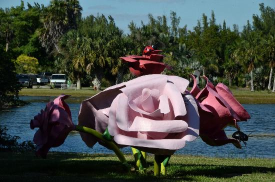Creative Sculpture Picture Of Fairchild Tropical Botanic