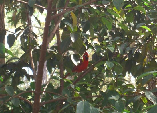 Disney s fort wilderness resort and cground a daily visitor to our