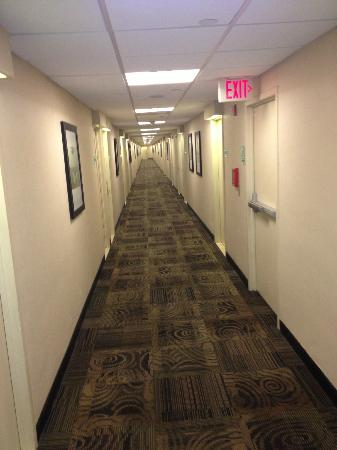 Miami International Airport Hotel: Typical corridor