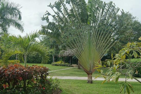 Zoetry Agua Punta Cana: Hotel grounds