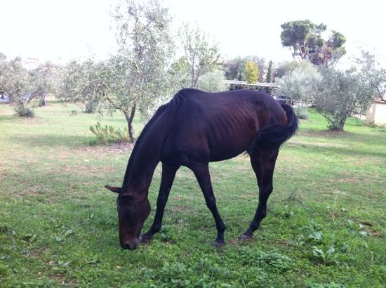 Fattoria San Martino: they have horses!