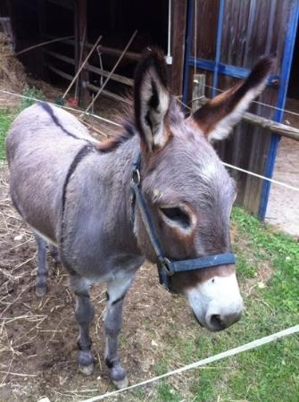 Fattoria San Martino: yep, they have a donkey as well.