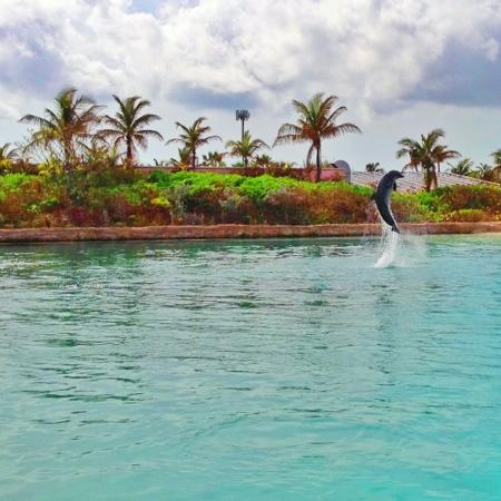 Atlantis - Beach Tower: shallow swim with the dolphins, taken with my iphone